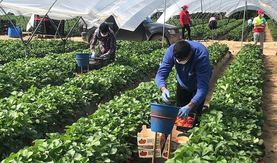 La lucha de los jornaleros agrícolas contra el coronavirus y la patronal