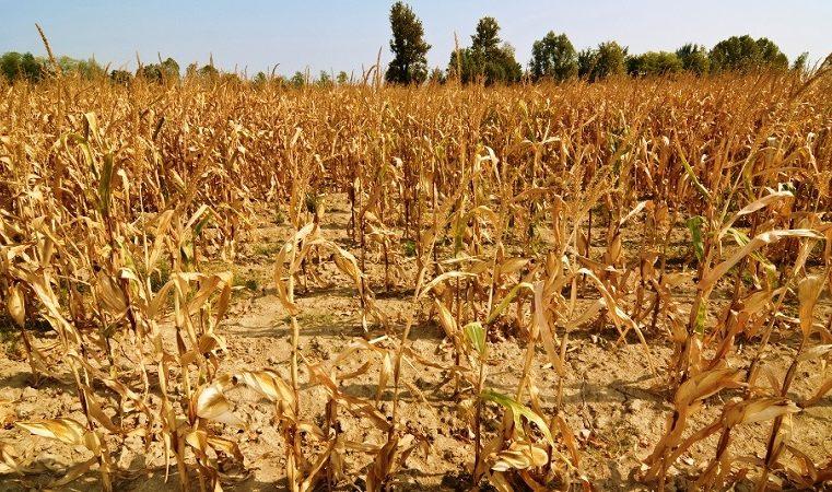 Cambio climático: Las devastadoras perspectivas de un aumento de las sequías prolongadas